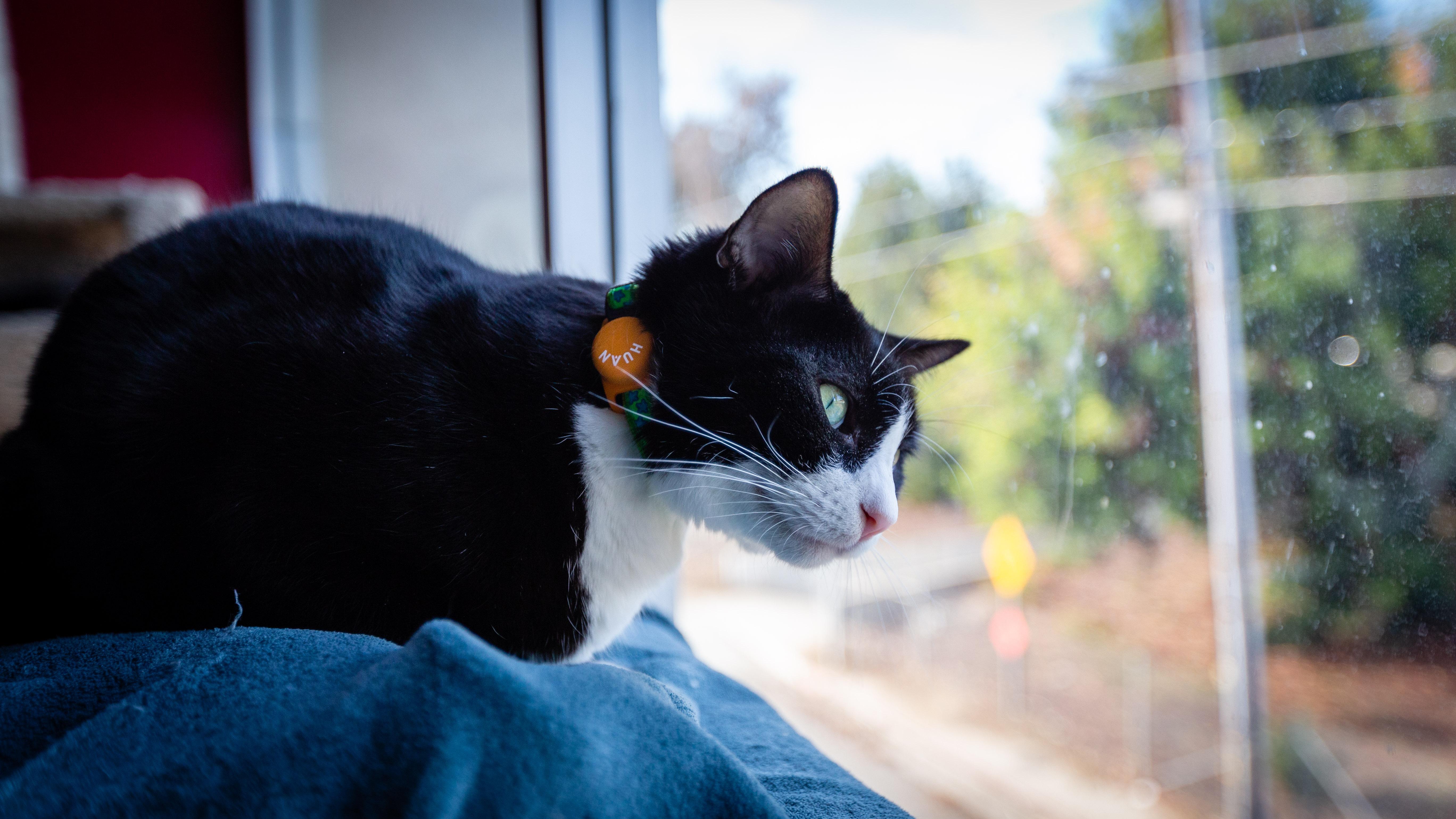 Cat_wearing_Tiny_Huan_Tag.jpg